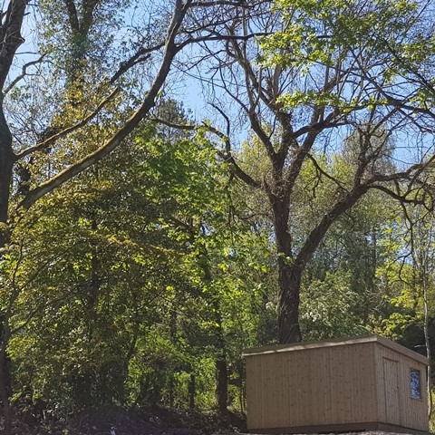 Our cabins are tucked away surrounded by trees