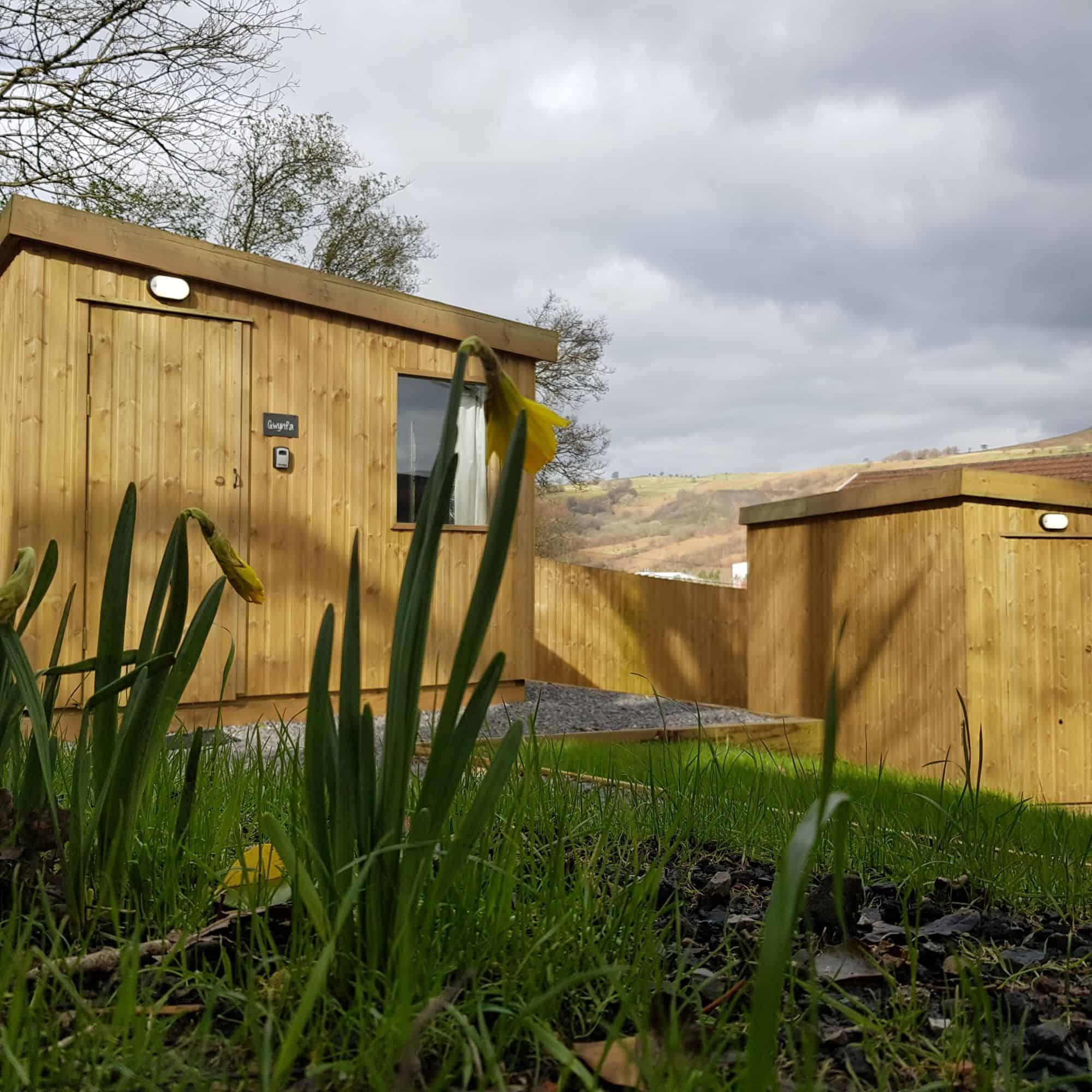Cabin viewed through daffodils