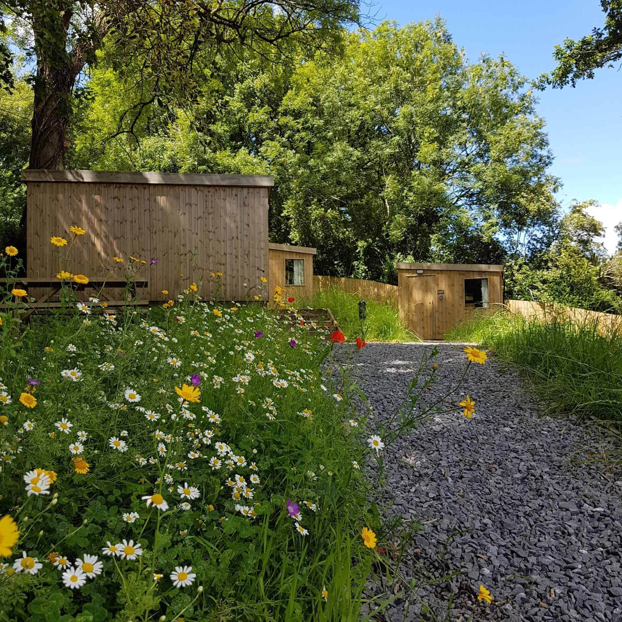 A view of the cabins at Roost Merthyr Tydfil with wild flowers and a background of trees